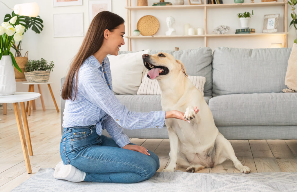 Woman playing with dog in the living room